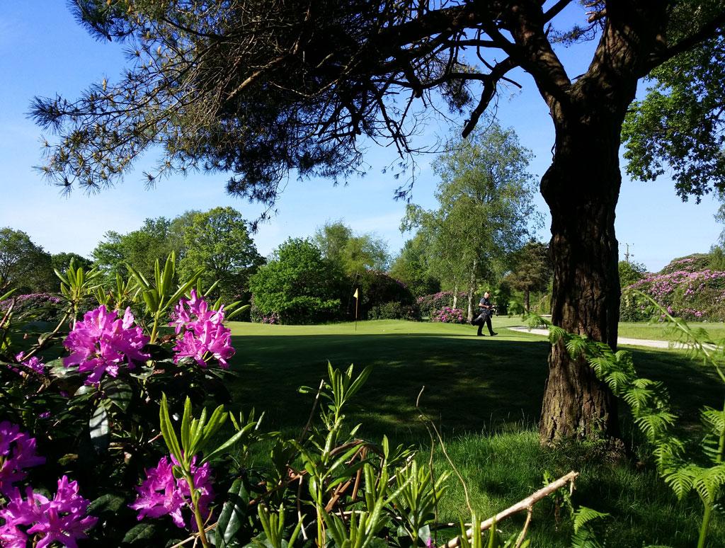 Dorset-Flower-Show